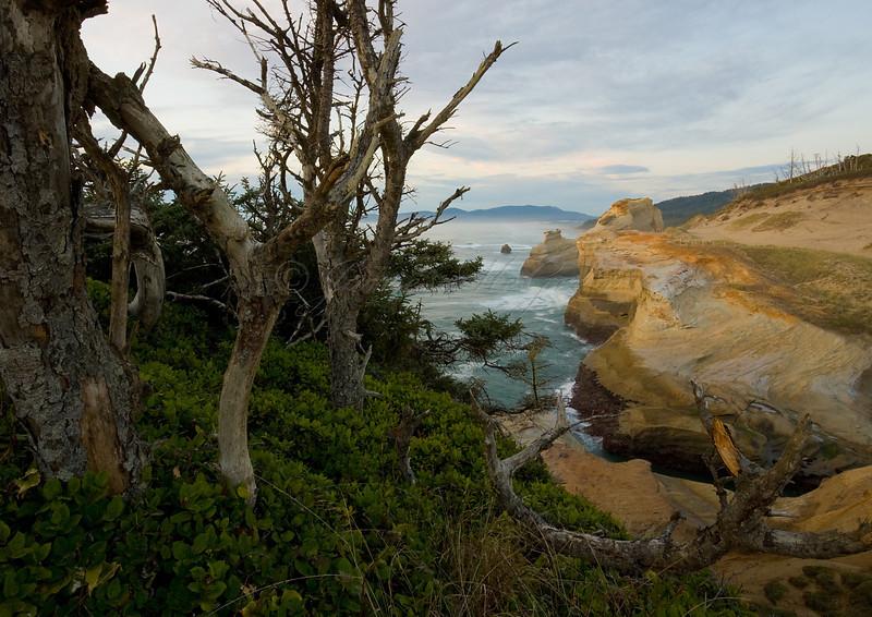 Sitka Spruce and Sandstone.  Cape Kiwanda, OR. ©2011 James McGrew