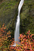 Horsetail Falls and Dogwood, Autumn.