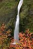 Horsetail Falls and Dogwood, Autumn.