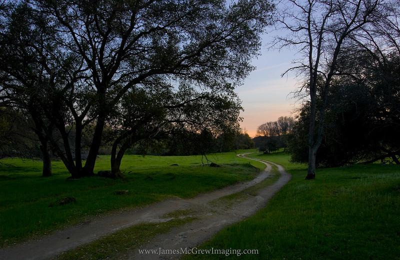 Trail Through the McKenzie Twilight.  ©2010