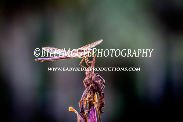 Brookgreen Gardens - 26 Aug 2014