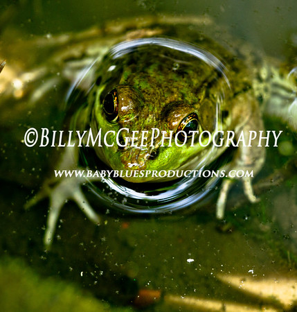 Frog-Face - IMG-5895