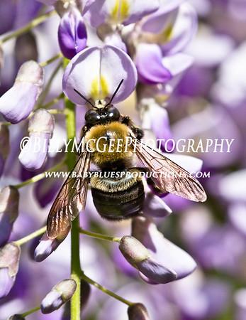 Longwood Flower Gardens - Honey Bees - 14 Dec 10