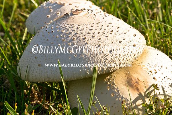 Mushrooms - 19 Aug 10