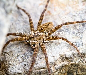 Water Spider - 26 Sep 10