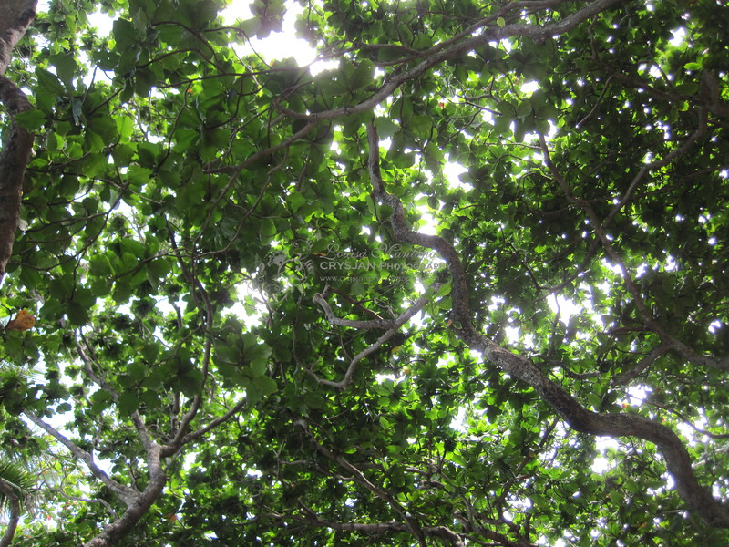 I just look up and appreciate the shade I get from this tree.