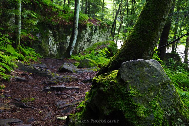 Along Kildoo Trail 0658