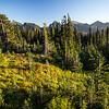 Scarlet Paintbrush, Mt Rainier National Park, Washington