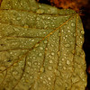 rainy day leaf