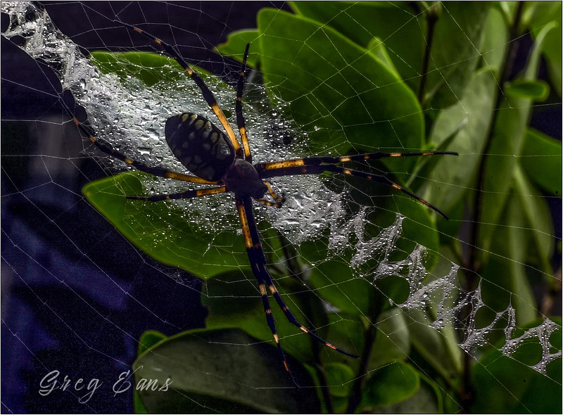 Writing Spider.