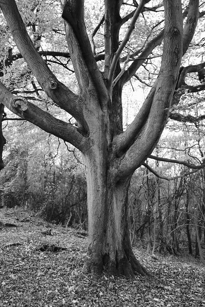 Tree Trunk On The Ridgeway Path