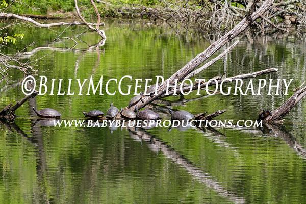 Patapsco State Park - 20 Apr 12