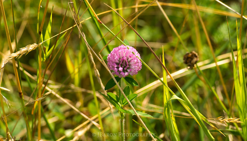 Blooming in a Busy Field