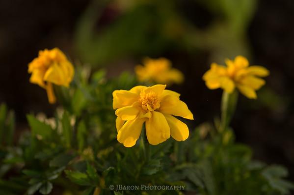Centered Yellow Flower Macro