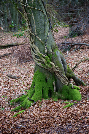 Tree roots moss