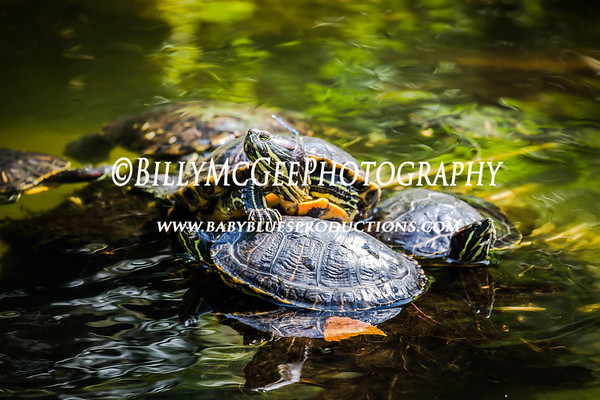 DC National Zoo - 11 Jul 2015