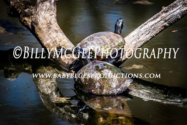 Lost Pond Turtles - 12 Apr 2015