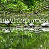 Turtle-Family - IMG-7344