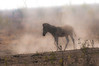 a zebra emerges from the hazy dust