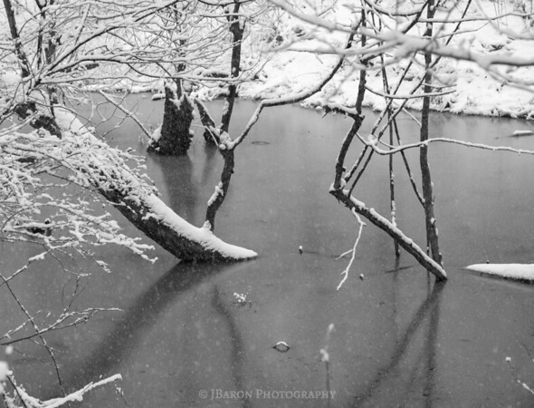 Frozen Wetlands II