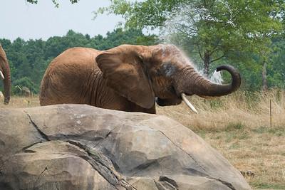 NC Zoo - June 2008