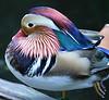 North Carolina Zoological Park