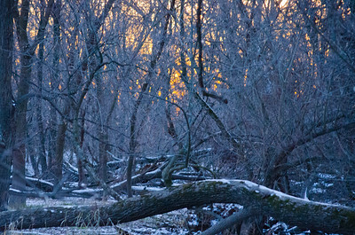 009_Winter Forest _28_Photo-by-Johnny-Nevin