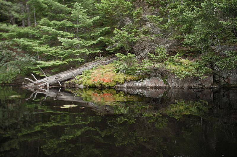 Bog River Reflection