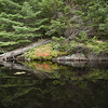Bog River Reflection
