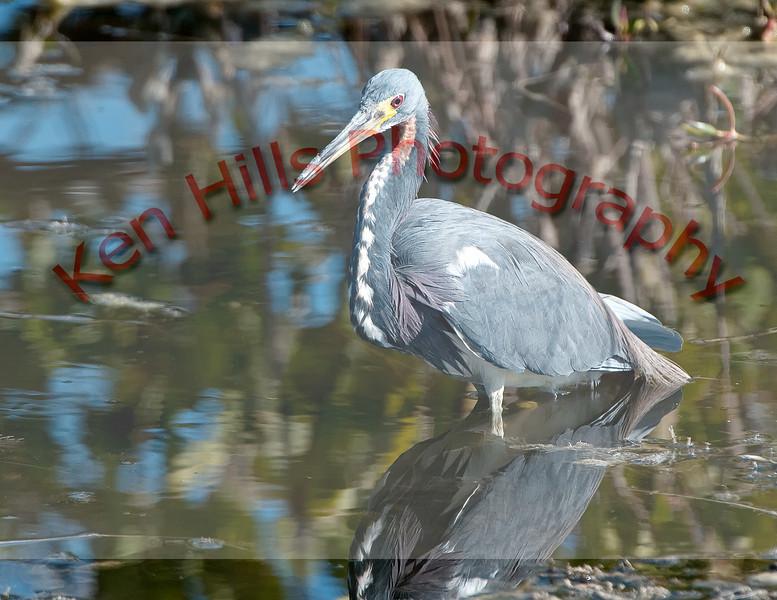 0158-Merrit-Island-Bird-Photos