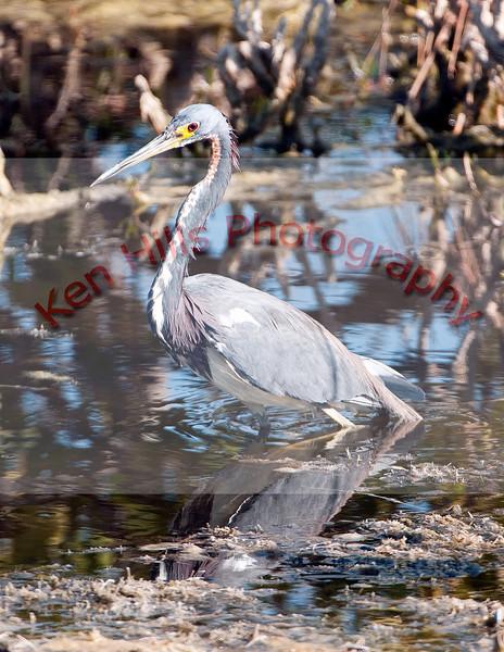 0151-Merrit-Island-Bird-Photos