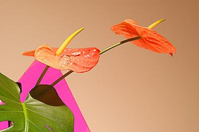 Ikebana Floral Arrangement