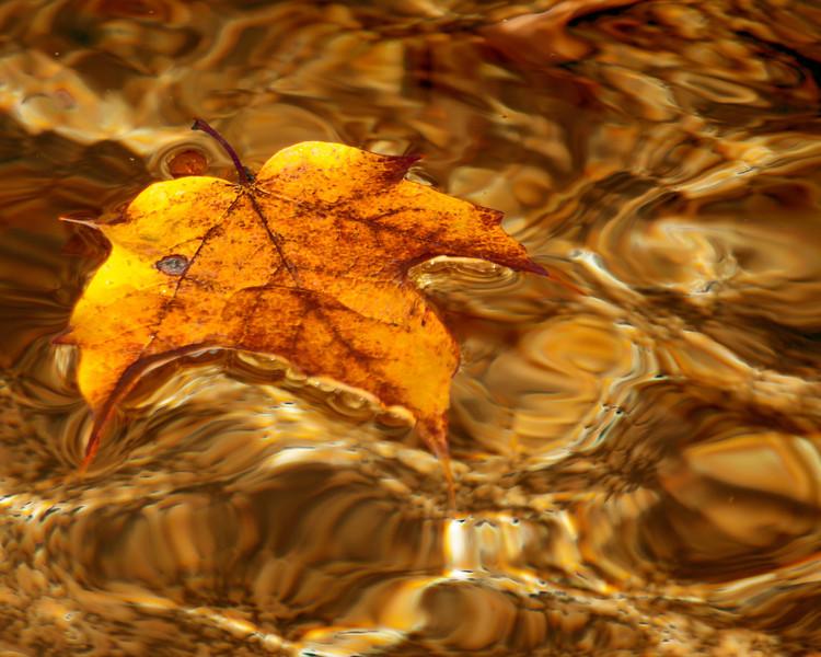 Leaf Afloat