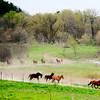 LUV's Morgan Horses