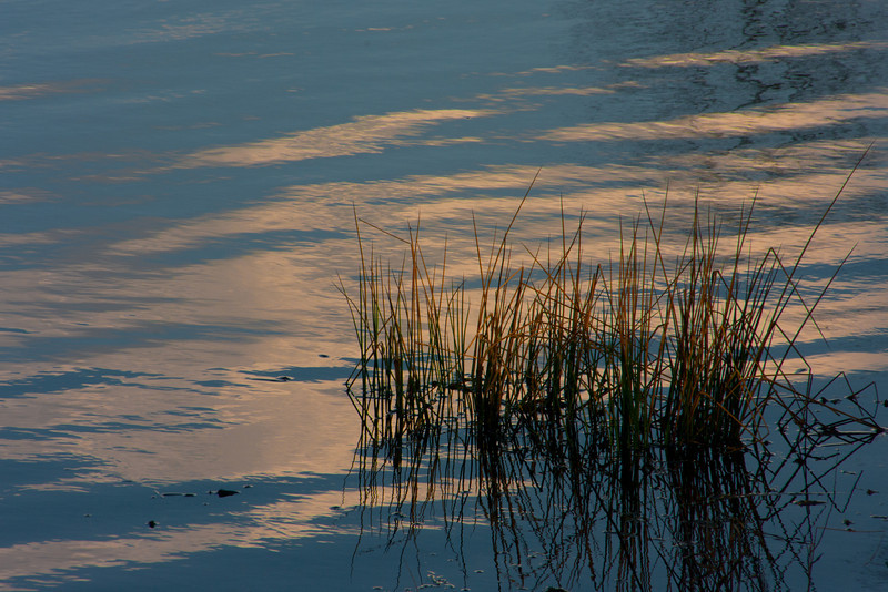 Reeds at Sundown