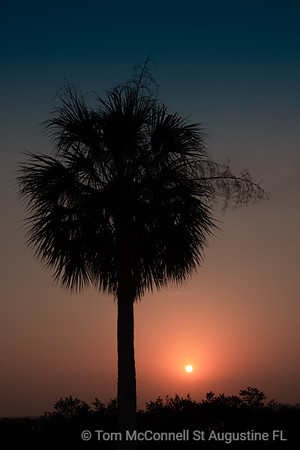 Sunrise on Palm Tree, Lewis Point Park, St. Augustine Florida