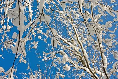 Snow's Got the Blues