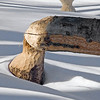 Beaver Work 1