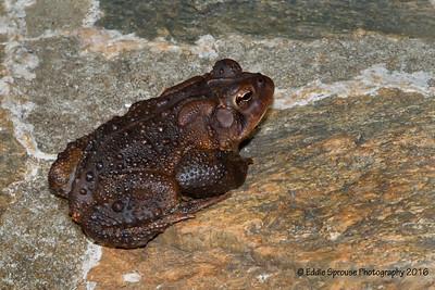 Very Hoppy Frog