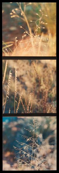 Grass Trio