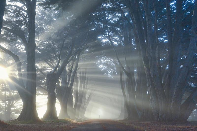 Tree Tunnel Sunrise II