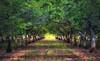 Winters Tree Grove