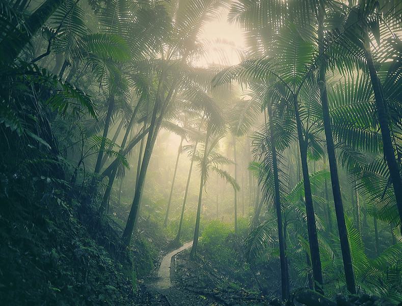 El Yunque National Rain Forest