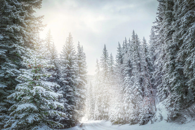 Winter Sundance