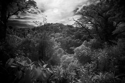 infrared_CCC9858