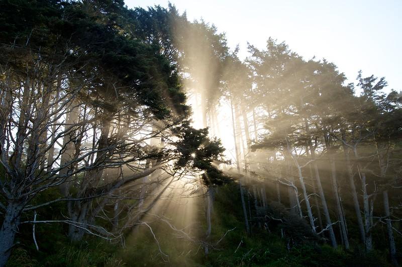 Arcadia Beach State Park Sunrise, Oregon Coast
