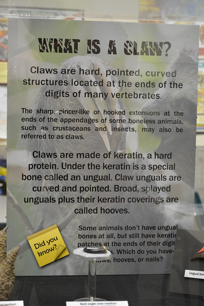 Claws and hooves sign