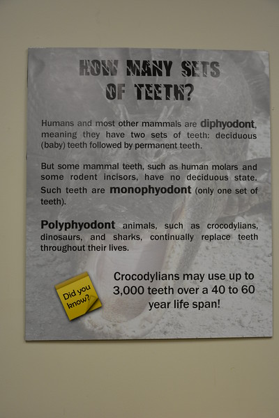 Replacement teeth sign