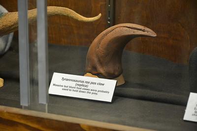 Tyrannosaurus foot claw