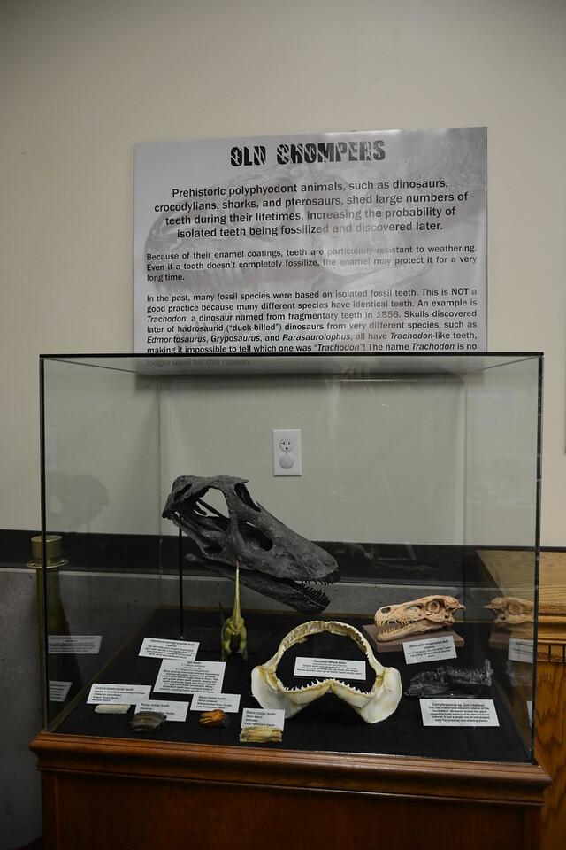 Second impressive animal teeth display